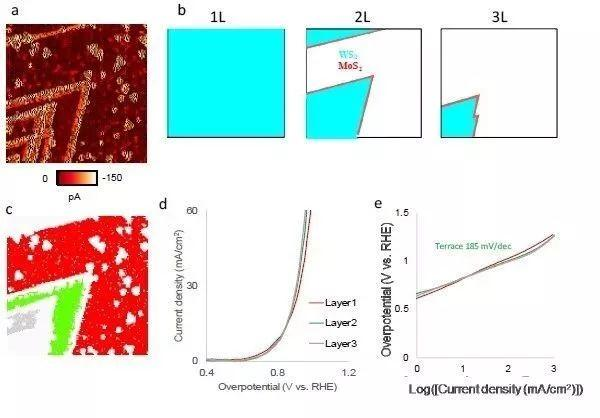 Angew: 电化学显微观察析氢反应中的过渡金属硫属化物
