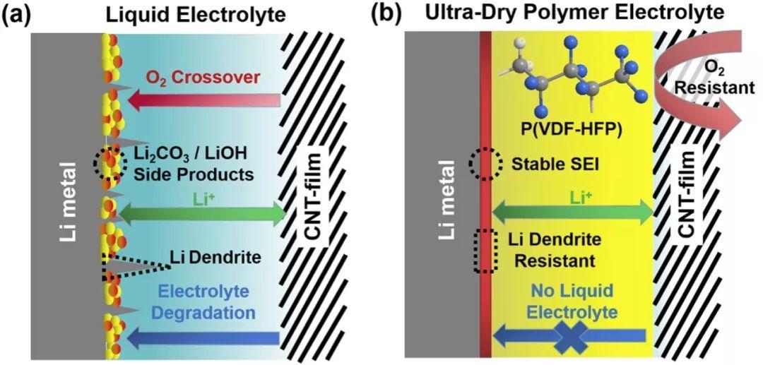 清华大学李亮亮&南策文ESM:耐氧和抑制锂枝晶的超干聚合物电解质用于固态Li-O2电池