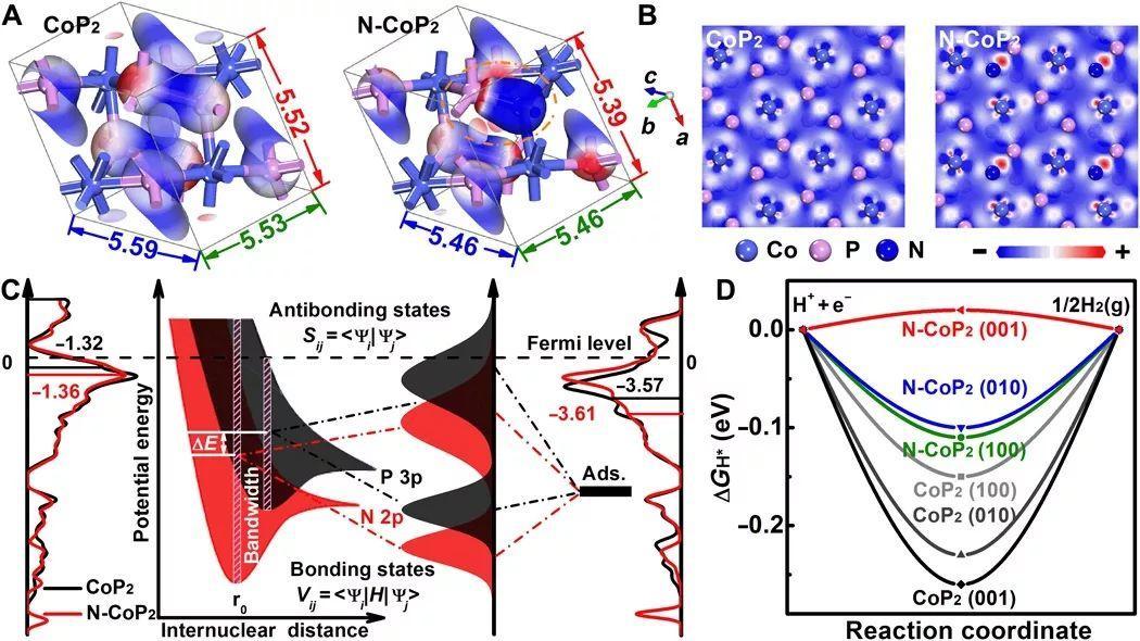 中科大Sci. Adv.:P太多了,磷化物HER活性就变差?晶格工程有办法!