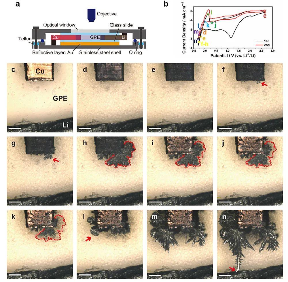 中科院化学所万立骏&文锐Angew: 一文看懂准固态锂金属电池中的锂枝晶及SEI形成过程