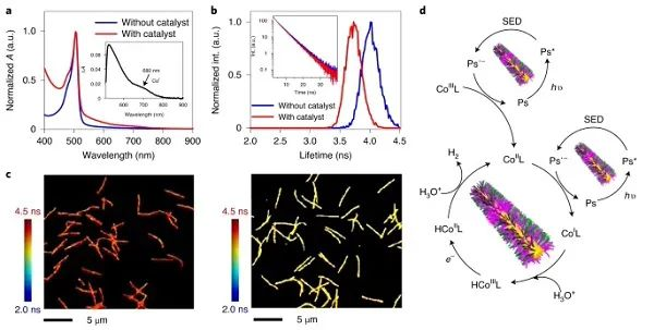 Nature Chemistry:一种高性能的可循环利用的核-壳纳米纤维结构光催化剂