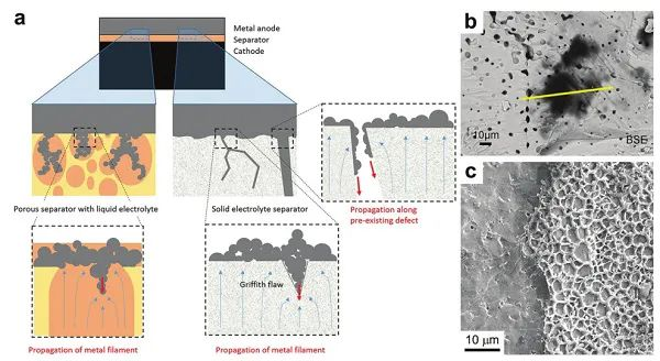EES综述:电化学动力学角度认识固态锂电池中锂金属的行为