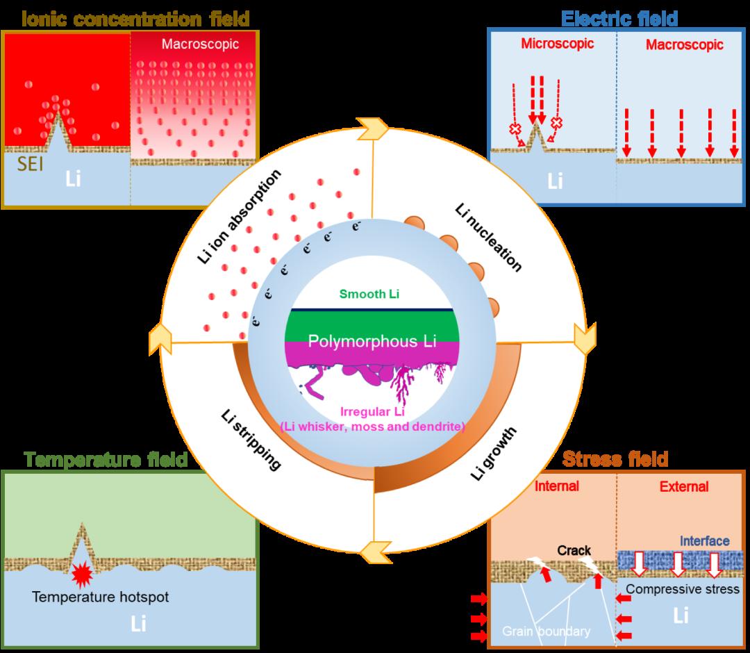 杨诚/康飞宇/忻获麟Chemical Reviews:多物理场视角下锂金属负极的多形体演化机制及调控策略