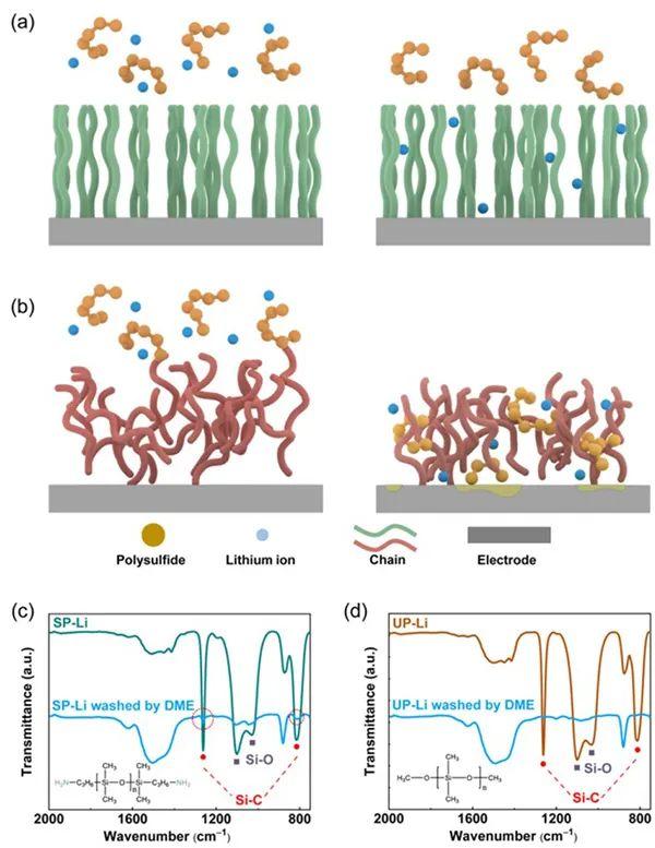清华张强教授Angew:选择性渗透的锂离子通道实现高能量密度锂硫软包电池