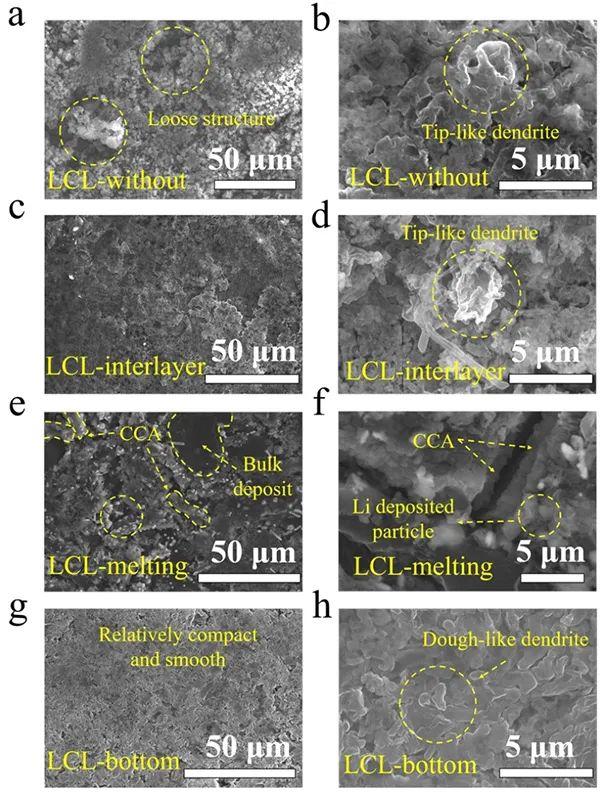 西安交大Angew:碳骨架位置换一换,锂金属性能大不同!