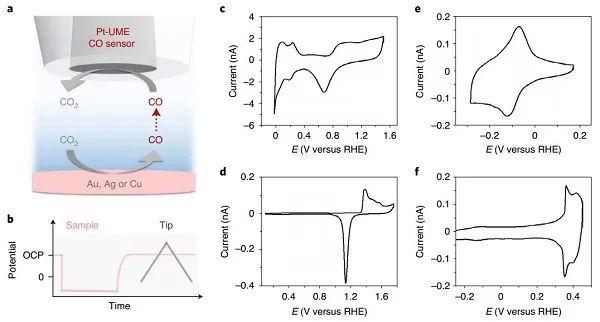 莱顿大学Nature Catalysis:电解液中阳离子的种类对CO2RR行为有何影响?