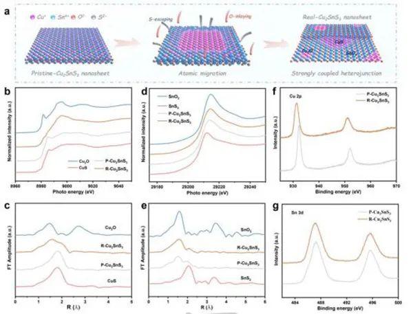 翟天佑&刘友文Angew:原位相分离构建耦合界面,促进CO2电还原为甲酸盐