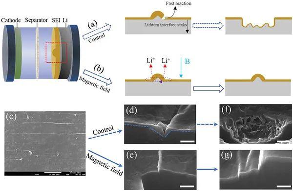 韩永生AEM:磁场调控锂负极SEI层稳定性